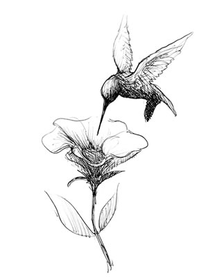 Hummingbird tattoo black and white