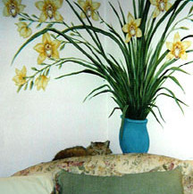 Michelle Phillips Orchids