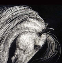 White Horse Drawing