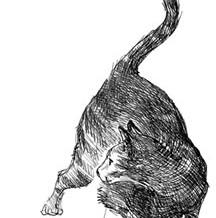Attack Cat Sketch